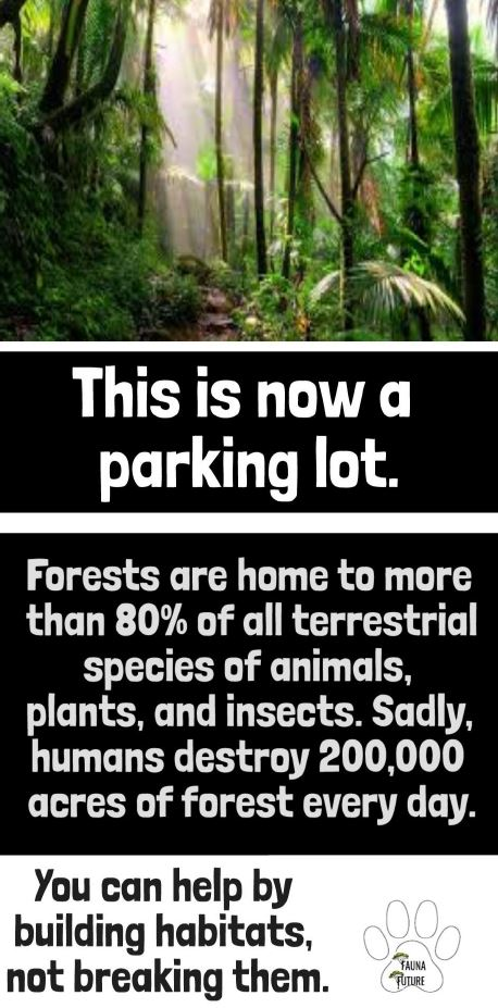 Future Genius Team Elektra Student work: Digital Posters: Forests: This is now a parking lot.